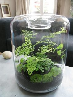 Terrarium can be up with moss because it stays …