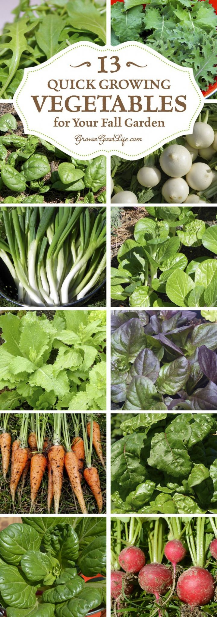 13 fast-growing vegetables for your fall garden