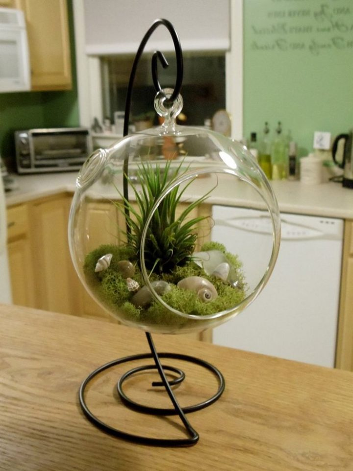 46+ Great Air Plant Terrariums Ideas for Your Stunning Home / FresHOUZ.com