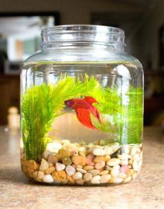 Creative ideas for the fishbowl
