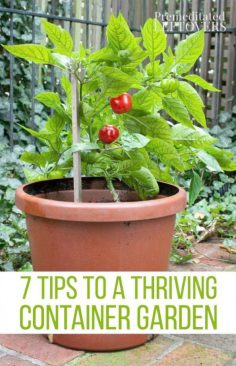 Gardening tips How to border landscaping or Hom …