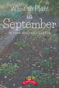 I'm not sure what to plant in September in your vegeta …