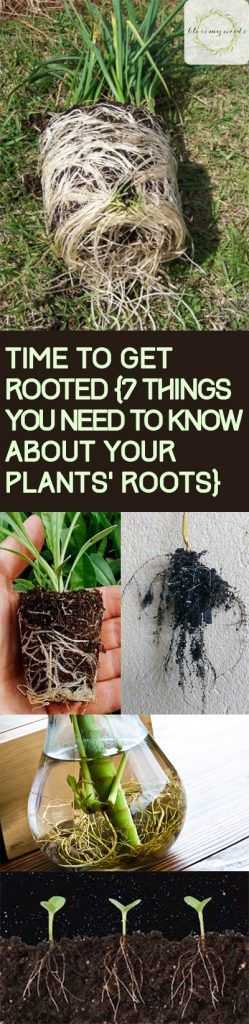"""It's time to take root {7 things you need to know about your plants """"…"""