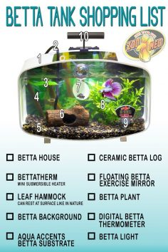 Know what you need in your tank to keep your betta …