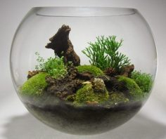 Make your miniature garden in a glass bowl: Ideas for glass terrariums, #bowl #Garden #Glass …