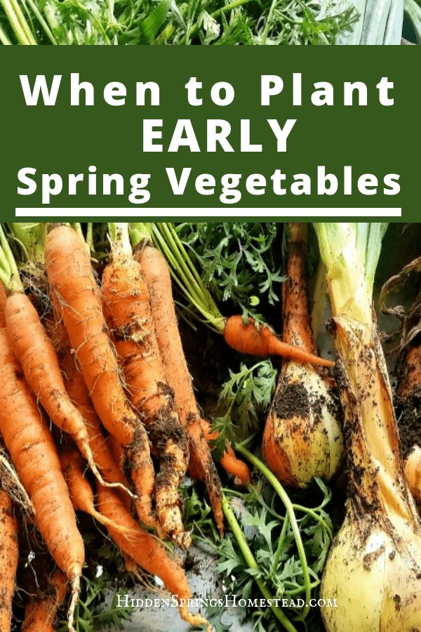 When to plant early spring vegetables