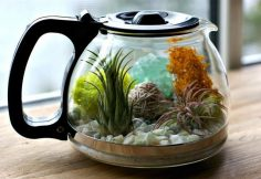 terrarium with teapot