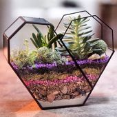 DISCOVER: The 14 best DIY mini glass terrarium ideas in …