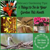 February gardening tips: 5 things to do in Garden