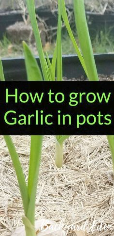 Gardening tips for carrots to the best tips for Sprin …