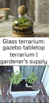 Glass terrarium: table terrarium gazebo | gardener supply 11