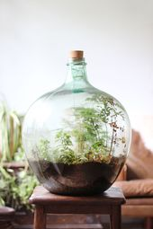 How to plant a closed terrarium of carboy bottles
