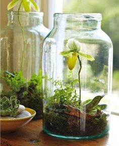 Make your miniature garden in a glass container: Ideas for glass terrariums Little P …, #bowl # …