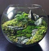 More than 40 suggestions on how to build a terrarium yourself – Archzine.net