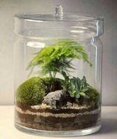 Terrarium closed 101: 7 simple steps to build your glass terrarium