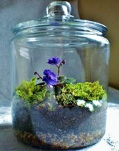 The latest DIY terrarium design ideas to inspire you …