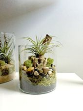 43 popular ideas for home air plant display – ROUNDECOR