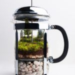 16 terrarium projects you can do yourself: the best craft ideas