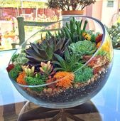 20 mini ideas of succulent gardens worldwide