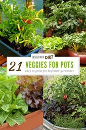 21 best container-friendly gardening vegetables and pot-friendly fruits