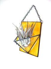 50+ Air Plant Terrarium Kit and Stained Glass Inspiration