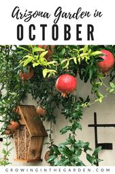 Arizona Garden in october | Growing in the garden