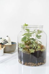 DIY terrarium with glass bottles and jars