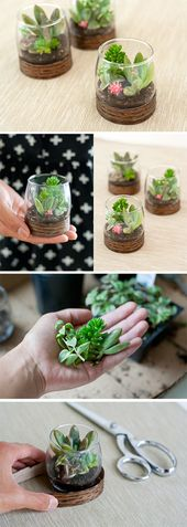 DIY: wooden base terrariums. A cute and ecological …