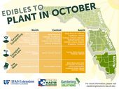 Edible food vegetable plants to start in October i …