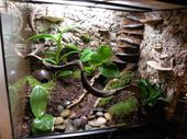 HOW TO BUILD A LIVE DART FROG