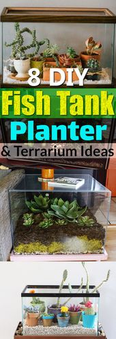 How to turn old fish tanks into amazing pots and terrariums