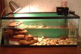 Pet turtle care in tanks