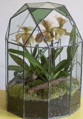 Terrariums: beautiful enclosed gardens that you can build at home