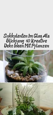 The succulents in the glass as a point of attraction: 40 creative ideas of decoration with plants