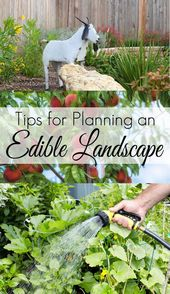 Tips for the food business # 6MonthBabyFoodTips #Garden …