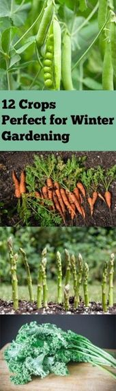 12 perfect crops for winter gardening