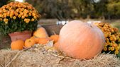 20 excellent gardening tips for your October garden | Organic gardening blog