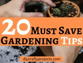 20 tips to save on gardening – DIY craft projects