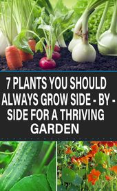 7 plants you should always grow side by side for a thriving garden