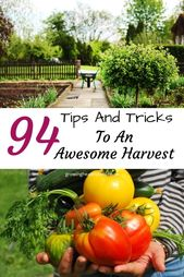 Awesome tips for your first garden – Growing healthy children