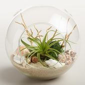 Beach Garden Live Plant Glass Terrarium by World M …