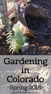 Gardening in Colorado Spring 2018 ~