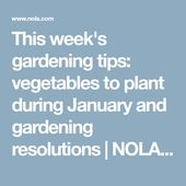 Gardening tips this week: vegetables to plant during January and gardening resolutions