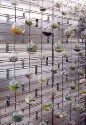 Glass and terrariums – Cactus Jungle