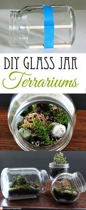 How to do DIY in glass jars terrariums: my husband has too many hobbies