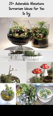 More than 25 adorable miniature terrarium ideas for you to try – Garden