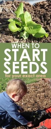 Seed starter planner for any zone | When to plant free tool
