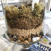 Terrarium closed 101: 7 simple steps to build your glass terrarium: my tasteful space