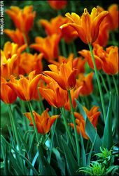 The 20 best tips for planting bulbs