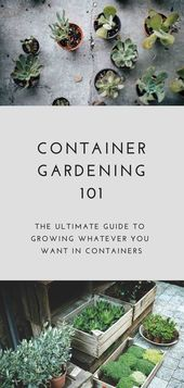 The BEST guide to pot gardening (all you need to know)